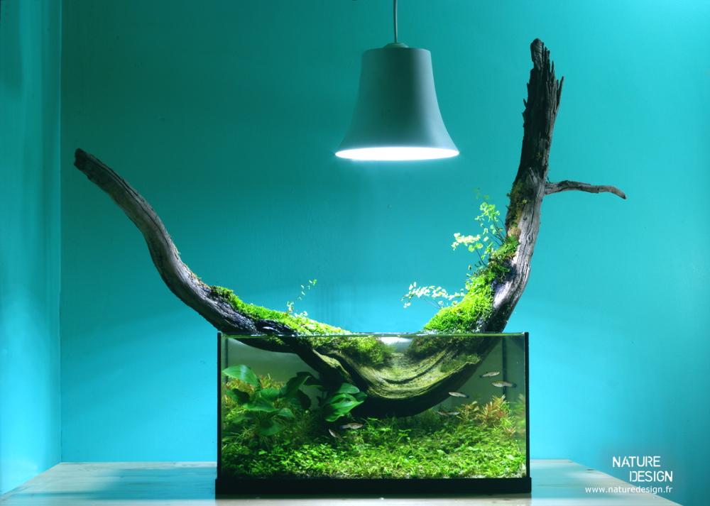 Terrariums, aquariums : les jardins d\'intérieur pour l\'hiver